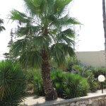Palmboom Israël Nes Ammim